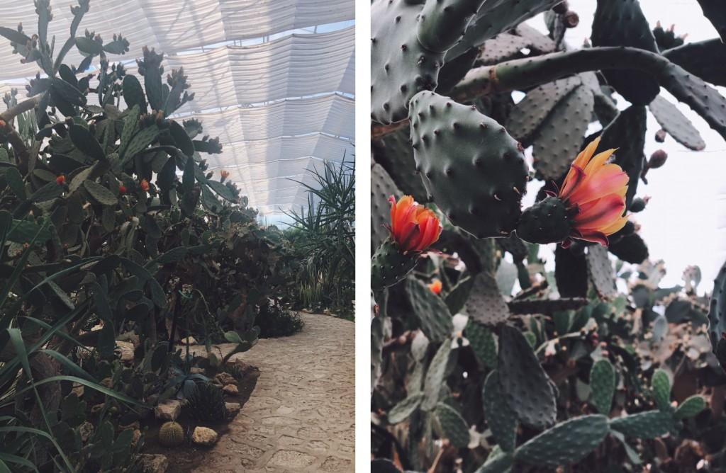 balchik_botanicheska_gradina